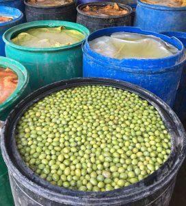 تولید انواع زیتون طارم